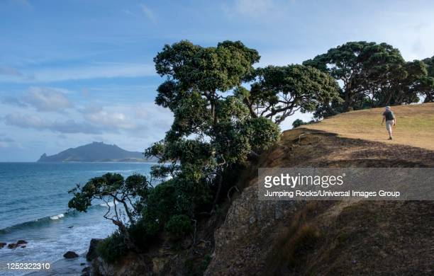 man walking cliffs at taiharuru near parua bay and whangarei, north island, new zealand - whangarei heads stockfoto's en -beelden