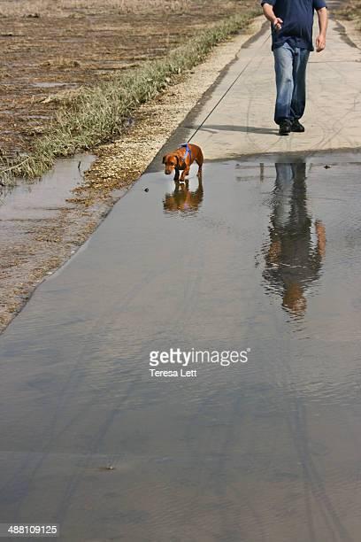 Man walking dachshund dog