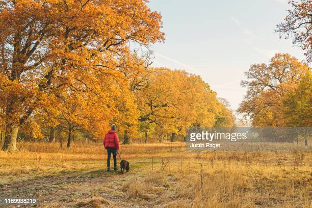man walking dog in autumnal country side - pet lead stock pictures, royalty-free photos & images