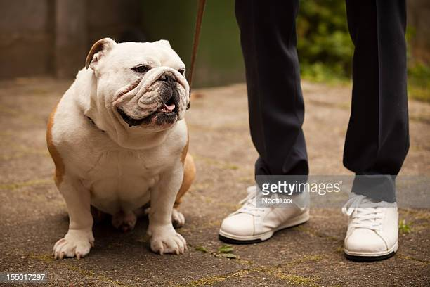 man walking his bulldog - hairy man chest stock photos and pictures
