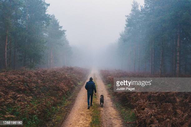 man walking his dog in misty forest - england stock pictures, royalty-free photos & images