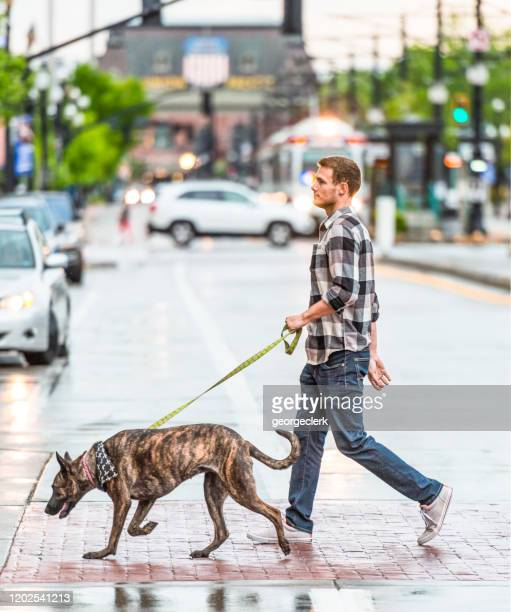 man walking his dog in salt lake city - pedestrian stock pictures, royalty-free photos & images