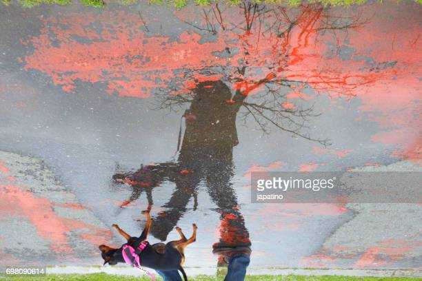 Man walking his dog in the rain reflected in a puddle