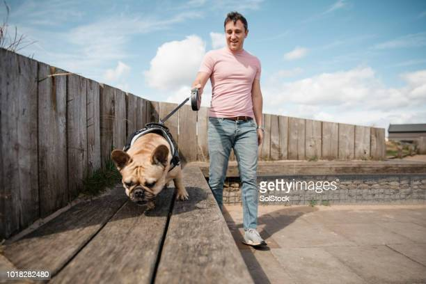 man walking his dog - dog walker stock photos and pictures