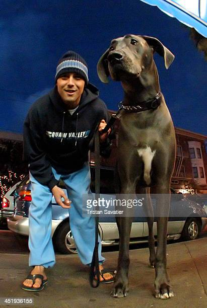 Man walking his Great Dane dog. The Great Dane, also denoted as Grand Danois, is a German breed of dog known for its giant size. They are known for...