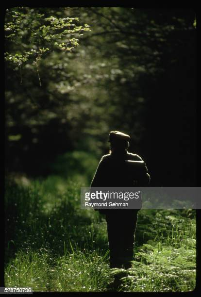 man walking in forest - bialowieza forest stock pictures, royalty-free photos & images
