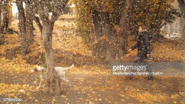 Man Walking In Forest Seen Through Glass Window During Rainy Season