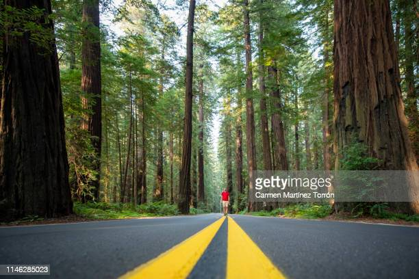 man walking in the forest. redwoods national park, usa. - state park stock pictures, royalty-free photos & images