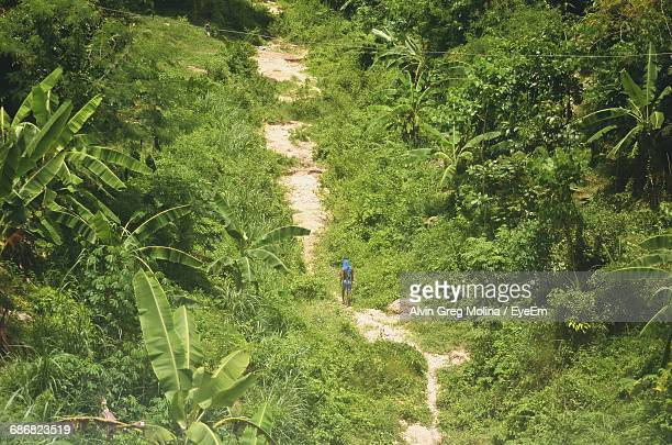 Man Walking In The Jungle