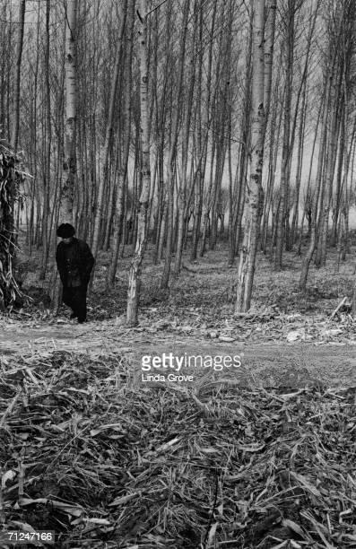 A man walking in the woods Harbin China circa 1995