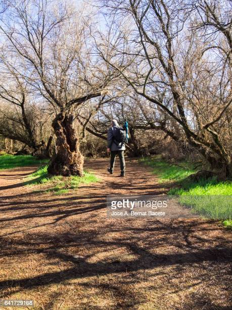 Man walking of excursion, for a narrow dirt track with puddles of rain surrounded with trees (tamarix  canariensis)