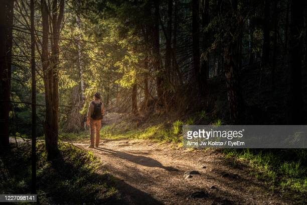 man walking on a forest road towards the evening sun - arne jw kolstø stock pictures, royalty-free photos & images