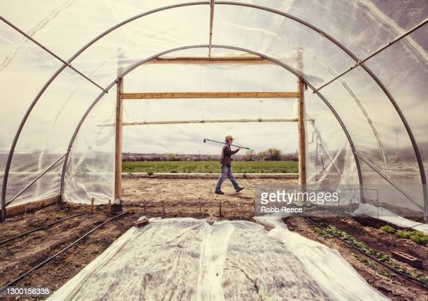 man walking on an organic farm - robb reece stock-fotos und bilder
