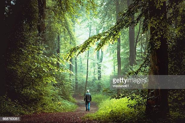 man walking on forest track in morning light - north rhine westphalia - fotografias e filmes do acervo