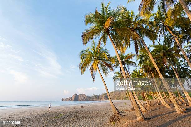 man walking on the beach at sunrise, playa carrillo, costa rica - playa carrillo fotografías e imágenes de stock
