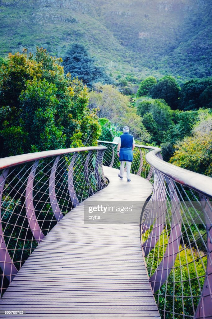 Man walking on the Boomslang Tree Canopy Walkway in Kirstenbosch National Botanical Gardens in Cape Town South Africa & Man Walking On The Boomslang Tree Canopy Walkway In Kirstenbosch ...