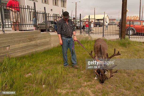 Man walking pet caribou