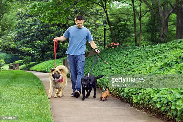Man walking three dogs