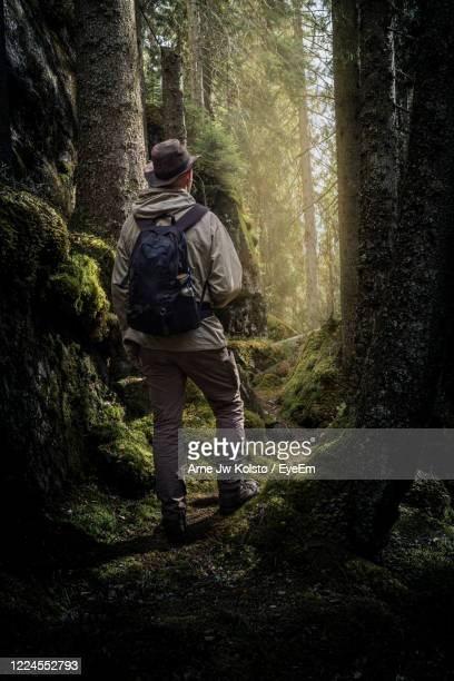 man walking through a forest on a footpath into a bright glade - arne jw kolstø stock pictures, royalty-free photos & images