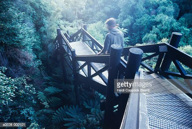 man walking through forest - heidi coppock beard stock-fotos und bilder