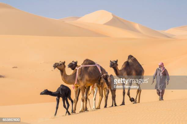 Man walking with camels