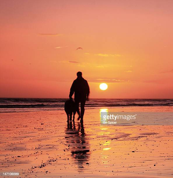 man walking with dog on beach at dusk - 北ヨーロッパ ストックフォトと画像