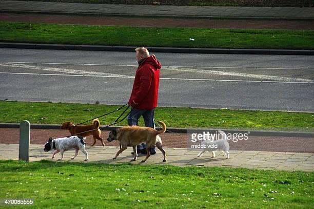 Mann mit seinem Hund zu Fuß