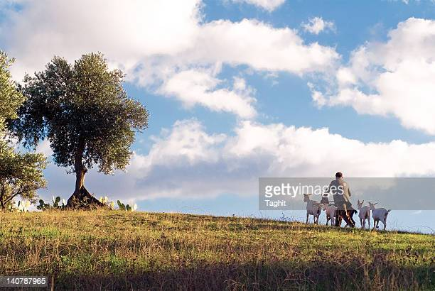 Man walking with his goats on mountain