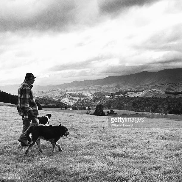 Man walking with two dogs in field (Toned B&W)