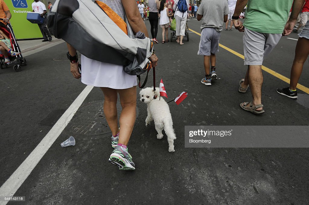 A man walks a dog carrying Canadian flags on Canada Day in Ottawa, Ontario, Canada, on Friday, July 1, 2016. On July 1, thousands of locals and tourists gather in Ottawa's downtown area to celebrate. This year marks Canada's 149th birthday and Justin Trudeau's first Canada Day as Prime Minister. Photographer: David Kawai/Bloomberg via Getty Images
