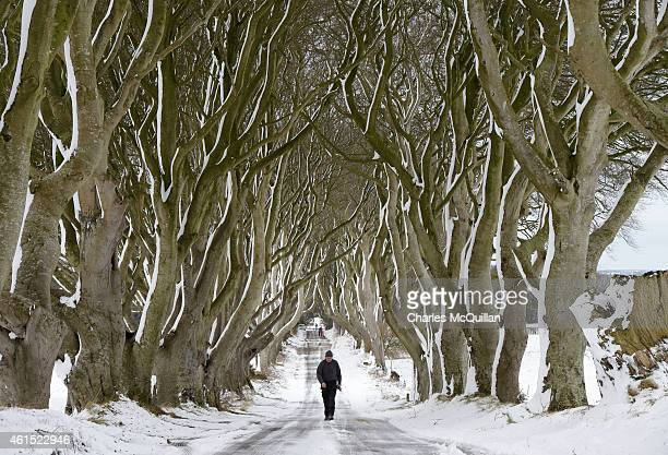 A man walks along the famous Dark Hedges avenue of trees on January 14 2015 in Antrim Northern Ireland The province experienced heavy snowfall as a...