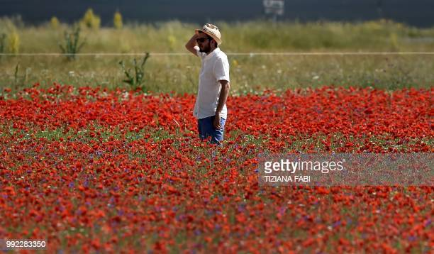 A man walks amongst blooming poppies flowers near Castelluccio a small village in central Italys Umbria region on July 5 2018