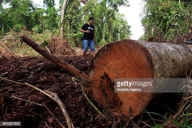 A man walks at a damaged area in a forest during a demonstration demanding the protection of Leuser Ecosystem one of the richest expanses of tropical...