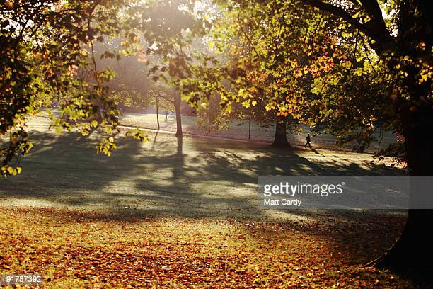 Man walks below trees as the early morning sunlight breaks through leaves that are begining to change colour in Victoria Park on October 12, 2009 in...