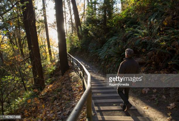 man walks down steps through forest and into the sunlight - escapism stock pictures, royalty-free photos & images