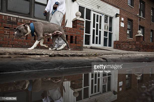 A man walks his dog in front of the apartment building where Dominique StraussKahn's alleged sexual assault victim purportedly lives May 18 2011 in...