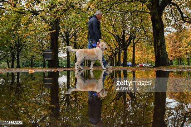 Man walks his dog under trees reflected in a puddle after rainfall in Greenwich Park, south-east London on October 3, 2020. - Heavy rain is lashing...