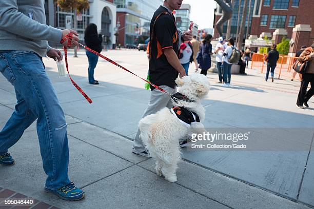 A man walks his dog which wears a Giants jersey and jumps excitedly towards O'Doul Gate before the Dog Days of Summer promotional baseball game a...