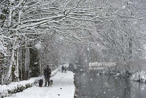 A man walks his dogs along the snowcovered towpath of the Huddersfield Narrow Canal in the village of Marsden northern England on January 21 during...