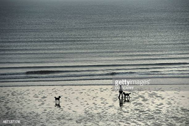 A man walks his dogs on the beach at low tide in Scarborough Northern England on March 20 2015 AFP PHOTO / OLI SCARFF