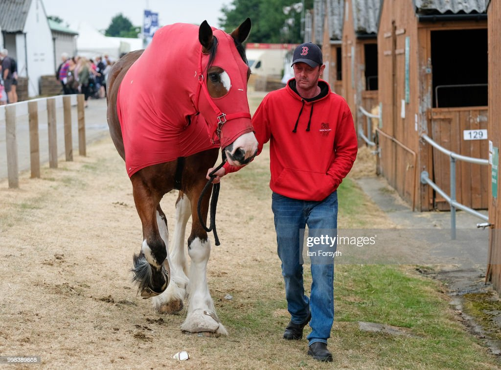 A man walks his horse alongside the stables during the final day of the 160th Great Yorkshire Show on July 12, 2018 in Harrogate, England. First held in 1838 the show brings together agricultural displays, livestock events, farming demonstrations, food, dairy and produce stands as well as equestrian events. The popular agricultural show is held over three days and celebrates the farming and agricultural community and their way of life.