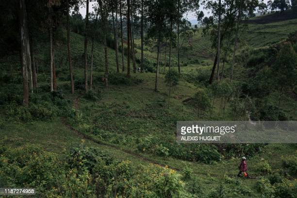 Man walks in a eucalyptus plantation of the WWF Ecomakala project to reduce illegal charcoal production, in Masisi territory, northeastern Democratic...
