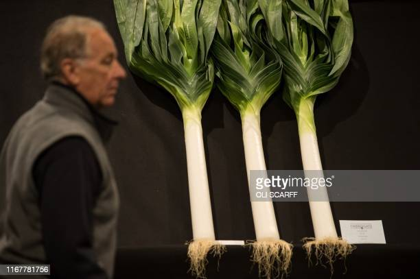 A man walks past a display of huge leeks on the first day of the Harrogate Autumn Flower Show held at the Great Yorkshire Showground in Harrogate...