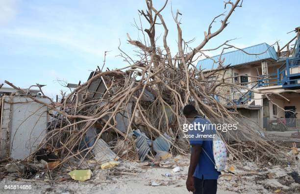 A man walks past a fallen tree on September 11 2017 in Philipsburg St Maarten The Caribbean island sustained extensive damage from Hurricane Irma