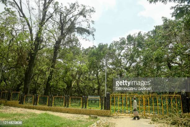 A man walks past a ground covered with fallen trees following the landfall of cyclone Amphan at the Indian Botanical Gardenin Kolkata on May 24 2020...