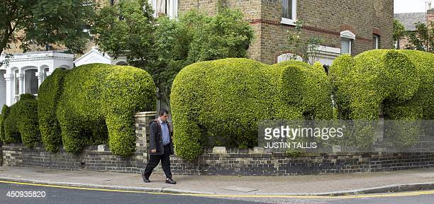 A man walks past a hedge cut into the shape of a family of elephants by architect Tim Bushe to raise money for charity in north London on June 20...