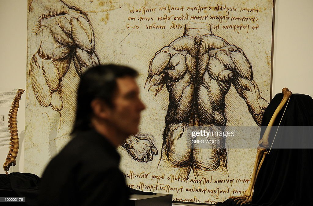 A man walks past a reproduction of sketches of the human body, which forms part of the Leonardo da Vinci exhibition Da Vinci Secrets 'Anatomy to Robots' at the Sydney Town Hall on May 20, 2010. The exhibition which runs until August 2, features in excess of 90 exhibits including life like anatomical models and body parts, interactive automatons and robotics all based on his drawings, as well as reproductions of his masterpieces. AFP PHOTO / Greg WOOD
