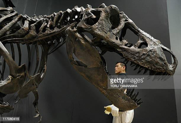 A man walks past a restored skeleton of a Tyrannosaurus Rex dinosaur ahead of the Dinosaur Expo 2011 at the National Museum of Nature and Science in...