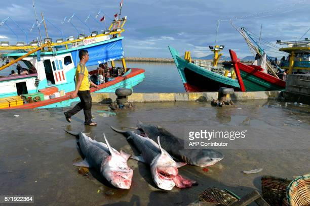 A man walks past tiger sharks that were caught by fishermen at Banda Aceh seaport in Aceh province on November 9 2017 Indonesia's economy grew more...