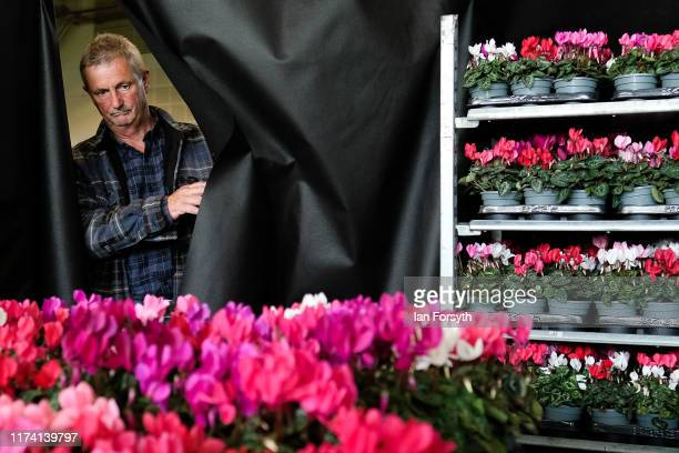 A man walks through a backdrop to his display as he makes final preparations during staging day for the Harrogate Autumn Flower Show on September 12...